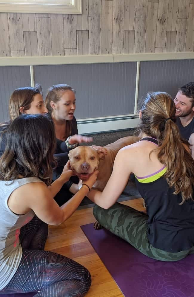 Yoga Wise Animal Rescue