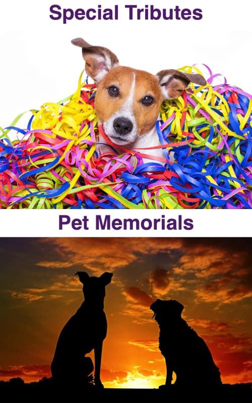 Special Tributes & Memorials